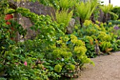 ARUNDEL CASTLE GARDENS, WEST SUSSEX: THE WALLED GARDENS: THE STUMPERY - EUPHORBIAS ALONG THE WALL