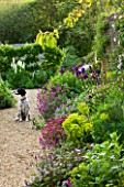ROCKCLIFFE HOUSE  GLOUCESTERSHIRE: THE WALLED VEGETABLE/ KITCHEN GARDEN WITH DOG AND BORDER OF IRISES  EUPHORBIAS AND ERYSIMUM