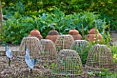 ROCKCLIFFE HOUSE, GLOUCESTERSHIRE: VEGETABLE GARDEN / KITCHEN GARDEN - WOVEN BASKETWARE SEEDLING PROTECTOR - CLOCHES - ORNAMENT, PROPOGATING, PROTECTING