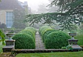 ROCKCLIFFE HOUSE, GLOUCESTERSHIRE: ROW OF CLIPPED TIOPIARY BALLS WITH PATH AND CONTAINERS, CEDAR OF LEBANON   - GREEN, HEDGE, COUNTRY GARDEN, SUMMER, MIST, FOG, ROMANTIC
