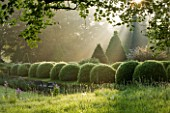 ROCKCLIFFE HOUSE, GLOUCESTERSHIRE: ROW OF CLIPPED TOPIARY BALLS AND CEDAR OF LEBANON TREE - GREEN, COUNTRY GARDEN, SUMMER, MIST, FOG, ROMANTIC