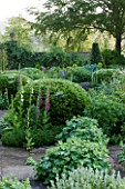 ROCKCLIFFE HOUSE, GLOUCESTERSHIRE: TERRACE WITH CLIPPED TOPIARY BALLS, ALCHEMILLA MOLLIS AND FOXGLOVES - GREEN, SUMMER, COUNTRY GARDEN