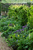 ROCKCLIFFE HOUSE, GLOUCESTERSHIRE: BORDER IN BLUE AND YELLOW - AQUILEGIAS, WHITE LUPINS - COUNTRY GARDEN, SUMMER