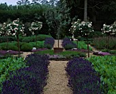 THE HERB GARDEN AT LE MANOIR AUX QUAT SAISONS WITH LAVENDER HIDCOTE  STANDARD ROSES  SORREL POT WITH OLIVE TREE