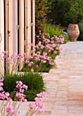 CORFU, GREECE - THE KASSIOPIA ESTATE: TERRACE WITH PINK FLOWERS OF TULBAGHIA VIOLACEA IN PLANTERS