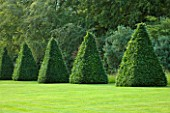 ROCKCLIFFE HOUSE, GLOUCESTERSHIRE: LAWN WITH CLIPPED TOPIARY BEECH PYRAMID. SUMMER, COUNTRY GARDEN, TRIMMED, CLIPPED, SHAPED, FRAMED