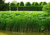 BIRTSMORTON COURT, WORCESTERSHIRE: VIEW TOWARDS THE WHITE GARDEN ACROSS THE MOAT TO CLIPPED TOPIARY HEDGES. CLASSIC, ENGLISH GARDEN, SUMMER, WATER, REEDS, POOL, LAKE