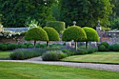POULTON HOUSE GARDEN, WILTSHIRE: LAWN, GRAVEL PATH -  CLIPPED TOPIARY, DOMED PRUNUS LUSITANICA WITH LAVENDER HIDCOTE - COUNTRY GARDEN, SUMMER, GREEN