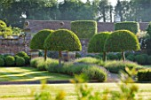 POULTON HOUSE GARDEN, WILTSHIRE: LAWN, GRAVEL PATH -  CLIPPED TOPIARY, DOMED PRUNUS LUSITANICA WITH LAVENDER HIDCOTE LEADING TO WALLED GARDEN -  COUNTRY GARDEN, SUMMER, GREEN