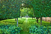 POULTON HOUSE GARDEN, WILTSHIRE: AN ARCH OF HORNBEAM HEDGING LEADS INTO THE ORCHARD, WITH APPLE, CRAB APPLE AND GREENGAGE TREES. WITH ALCHEMILLA MOLLIS IN FOREGROUND