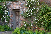 POULTON HOUSE GARDEN, WILTSHIRE: BEAUTIFUL ORNATE WOODEN DOOR IN WALL WITH CLIMBING ROSES AND ALCHEMILLA MOLLIS