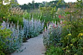 HORATIOS GARDEN  SALISBURY HOSPITAL  WILTSHIRE - DESIGNER CLEEVE WEST - STACHYS BYZANTINA SILVER CARPET DOMINATE THE BORDERS