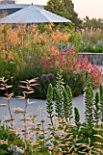 HORATIOS GARDEN  SALISBURY HOSPITAL  WILTSHIRE - DESIGNER CLEEVE WEST - DAWN LIGHT - CENTRANTHUS RUBER AND STIPA GIGANTEA IN BORDER WITH ACANTHUS AND ARUNCUS DIOICUS