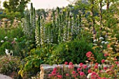 HORATIOS GARDEN  SALISBURY HOSPITAL  WILTSHIRE - DESIGNER CLEEVE WEST - BORDER WITH CENTRANTHUS RUBER  SHAGGY BOX BALL  ACANTHUS AND ARUNCUS DIOICUS HORATIO
