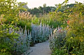 HORATIOS GARDEN  SALISBURY HOSPITAL  WILTSHIRE  - DESIGNER CLEEVE WEST - BORDER OF STACHYS BYZANTINA SILVER CARPET  FENNEL AND ARUNCUS DIOICUS HORATIO
