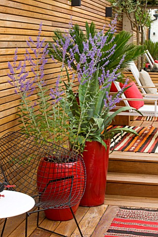 BEN_DE_LISI_HOUSE_AND_GARDEN__LONDON_BRAZILIAN_HARDWOOD_DECKING_WITH_RED_CONTAINERS_PLANTED_WITH_PER