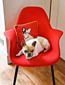 BEN DE LISI HOUSE AND GARDEN  LONDON: RED CHAIR IN LIVING ROOM WITH BEN DE LISI DOG CUSHION AND DOG