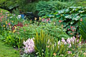 MARWOOD HILL  DEVON: WATERFALL IN THE BOG GARDEN WITH CANDELABRA PRIMULAS AND ASTILBES
