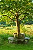 WOOLSTONE MILL HOUSE, OXFORDSHIRE: TREE SEAT IN GARDEN. A PLACE TO SIT. RELAX, CALM, SERENE