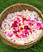COMMON FARM FLOWERS. SOMERSET, SUMMER - BASKET WITH FRESH ROSE PETALS FOR CONFETTI - ORGANIC  - FLOWERS, FLOWERING, PINK, CREAM, PETAL, WEDDING, WEDDINGS, NATURAL, REAL
