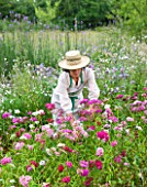 COMMON FARM FLOWERS, SOMERSET, SUMMER : LADY IN HAT CUTTING SWEET WILLIAM AURICULA EYES IN THE GARDEN - FLOWER, FLOWERS, NATURAL, FLOWER ARRANGING, CUTTING GARDEN