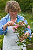 COMMON FARM FLOWERS, SOMERSET, SUMMER: FLOWER FARMER AND FLORIST GEORGIE NEWBERRY TRIMMING A STEM OF ROSA BONICA FOR CONFETTI - FLOWER, FLOWERS, POSIE, HANDS, NATURAL
