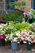 COMMON FARM FLOWERS, SOMERSET, SUMMER: BUCKETS AND CONTAINERS OF FRESHLY CUT FLOWERS READY FOR ARRANGING. FLOWER, FLOWERS, NATURAL