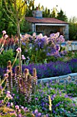 LE HAUT, GUERNSEY: BORDER WITH CAMPANULAS, LAVENDER AND ACANTHUS SPINOSUS WITH SWIMMING POOL AND POOL HOUSE BEHIND