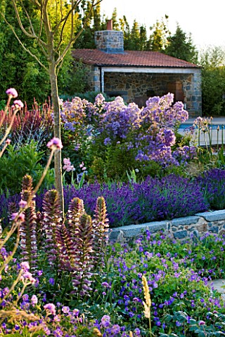 LE_HAUT_GUERNSEY_BORDER_WITH_CAMPANULAS_LAVENDER_AND_ACANTHUS_SPINOSUS_WITH_SWIMMING_POOL_AND_POOL_H