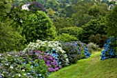 MARWOOD HILL  DEVON: HYDRANGEA BORDER AT THE TOP OF THE GARDEN