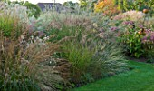 MARCHANTS HARDY PLANTS, EAST SUSSEX: BORDER WITH GRASSES AND LAWN. MOLINIA FONTANE, STIPA LESSINGIANA, MISCANTHUS SILBERSPINNE. COUNTRY GARDEN, ENGLISH
