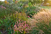 MARCHANTS HARDY PLANTS, EAST SUSSEX: BORDER AT SUNRISE WITH GRASSES. PERSICARIA SEEDLING, MISCANTHUS ADAGIO, HELIANTHUS ORGYALIS. COUNTRY GARDEN, ENGLISH, HERBACEOUS, PERENNIALS