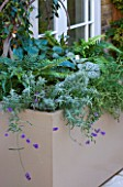DESIGNER STEPHEN WOODHAMS, LONDON: ROOF GARDEN - CONTAINER, PLANTER WITH FERNS, BRUNNERA, ROSEMARY AND LAVENDER. ROOF GARDEN, SHADE, SHADY