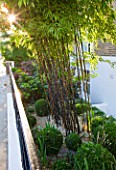 DESIGNER STEPHEN WOODHAMS, LONDON: FRONT GARDEN WITH BOX BALLS AND BAMBOO - PHYLLOSTACHYS NIGRA - SCREEN. BLACK, GRAVEL, FENCE, FENCING