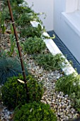 DESIGNER STEPHEN WOODHAMS, LONDON: FRONT GARDEN WITH BOX BALLS AND BAMBOO - PHYLLOSTACHYS NIGRA - SCREEN. BLACK, GRAVEL