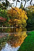THORP PERROW ARBORETUM, YORKSHIRE: VIEW ACROSS THE LAKE IN AUTUMN TO TREE REFLECTED IN LAKE - POND, POOL, AUTUMN COLOUR, FALL, REFLECTION