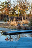 ELLICAR GARDENS, NOTTINGHAMSHIRE: VIEW ACROSS NATURAL SWIMMING POOL WITH DECKING AND CURVED WOODEN BENCH/SEAT. WINTER, FROST