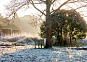 SEDGWICK PARK, WEST SUSSEX. WINTER. TREE WITH SEAT ON FROSTED LAWN WITH WINTER SUNLIGHT AND BLOCKS OF YEW. GARDEN, JANUARY