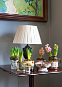 BUTTER WAKEFIELD HOUSE, LONDON. CHRISTMAS: SITTING ROOM WITH SIDE TABLE AND VINTAGE MUGS PLANTED WITH HYACINTHS