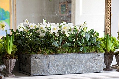BUTTER_WAKEFIELD_HOUSE_LONDON_CHRISTMAS_SITTING_ROOM_MANTELPIECE_WITH_METAL_TROUGH_PLANTED_WITH_HELL