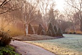 SIR HAROLD HILLIER GARDENS, HAMPSHIRE: THE WINTER GARDEN - MIST - PATH BY LAWN WITH BED OF PICEA GLAUCA ALBERTA BLUE AND PICEA GLAUCA ARNESONS BLUE VARIEGATED