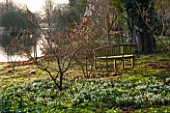 CHIPPENHAM PARK, CAMBRIDGESHIRE: SHEETS OF SNOWDROPS WITH WOODEN BENCH / SEAT BESIDE THE LAKE -  IN WINTER