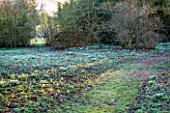 CHIPPENHAM PARK, CAMBRIDGESHIRE: SHEETS OF SNOWDROPS IN THE WILDERNESS - WINTER