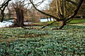 CHIPPENHAM PARK, CAMBRIDGESHIRE: SHEETS OF SNOWDROPS IN THE WILDERNESS WITH THE LAKE IN THE BACKGROUND - WINTER