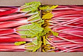E OLDROYD & SONS, YORKSHIRE : QUEEN VICTORIA FORCED RHUBARB AND TIMPERLEY EARLY FORCED RHUBARB PACKED READY FOR TRANSPORT