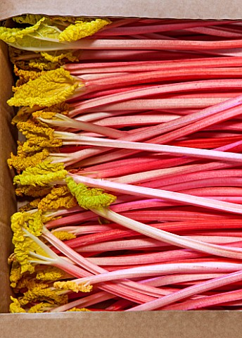 E_OLDROYD__SONS_YORKSHIRE__TIMPERLEY_EARLY_FORCED_RHUBARB_PACKED_READY_FOR_TRANSPORT