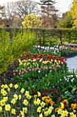 RHS GARDEN , WISLEY, SURREY: TUIPS, NARCISSI AND WALLFLOWERS - SPRING, BLOSSOM
