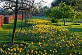 RHS GARDEN, WISLEY, SURREY: SPRING - DAFFODILS AT THE TOP OF THE PIET OUDOLF BORDERS