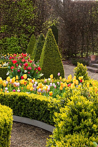 EAST_RUSTON_OLD_VICARAGE_GARDEN_NORFOLK_THE_DUTCH_GARDEN_PLANTED_WITH_TULIPS_IN_SPRING_MAY_FLOWERS_H