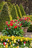 EAST RUSTON OLD VICARAGE GARDEN, NORFOLK: THE DUTCH GARDEN PLANTED WITH TULIPS IN SPRING. MAY, FLOWERS, HOT, BRIGHT, GRAVEL, PATIO, CLIPPED BOX, TRIMMED, TOPIARY, CONTAINERS